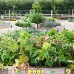Kitchen Garden low res 3