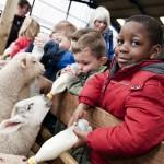 Adventure Farm School Visit low res (23)