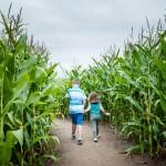 maize slider